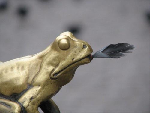 złota żaba co ma dobre pióro #żaba #toruń #thorn #pióro #gołąb