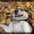 Pysiolek #pies #Pika #Pysio #kundelek #psy #psiak #spacer