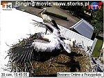 http://images23.fotosik.pl/12/e65c3f43fc35012fm.jpg
