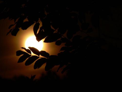 W świetle księżyca #noc