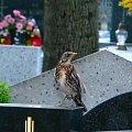 jakiś drapieżny ale nie jestem pewien #drapieżnik #ptak