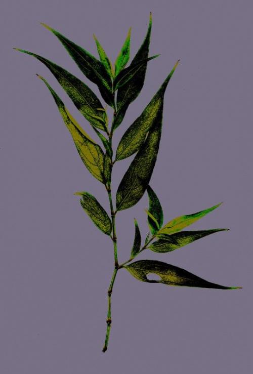 Gałązka na fiolecie