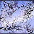 #natura #wiosna #gałęzie #niebo #przyroda #drzewa