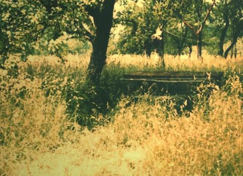 Stól... niedaleko Zagrzebia #stół #trawa #drzewo