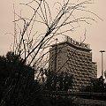Smutny krzew #Krzew #lumix #krzak #niebo #wieżowiec