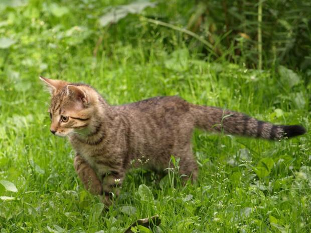 #koty #kocurek