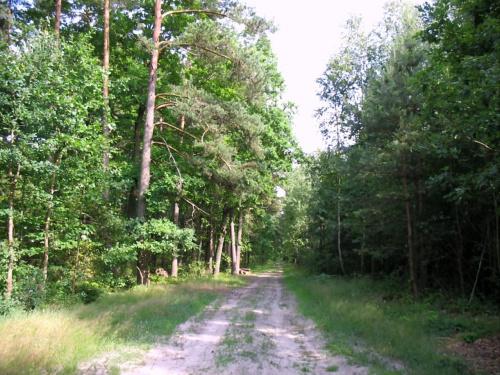 Droga przez las zwana droga wojenną (1) #droga #las #DrogaWojenna #wojna