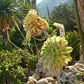 Piękne, egzotyczne rośliny #MonacoIMonteCarlo