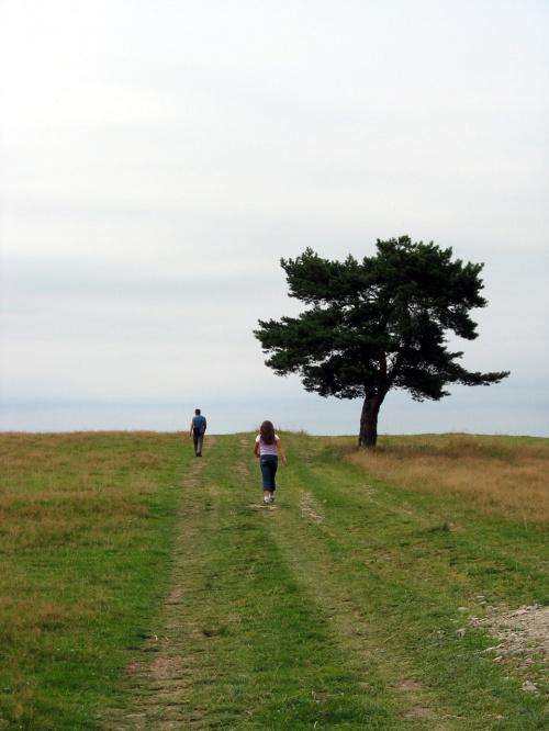 #drzewo #horyzont #łąka #PolnaDroga