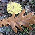 były liście dwa #Puszcza #jesień