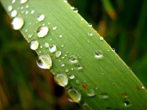 po deszczu w szuwarach