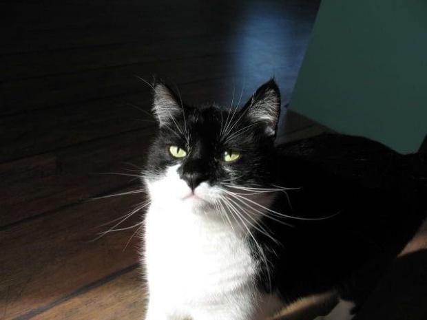 mój romeo #kot