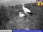 http://images23.fotosik.pl/40/f81cd5deef5648eam.jpg