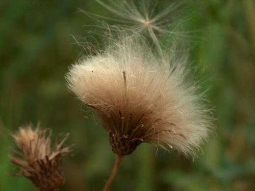 jak ta sie roślina nazywa?? prosze napisac jesli ktos wie