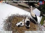 http://images23.fotosik.pl/7/122a7b50b3b36a47m.jpg