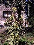 http://images23.fotosik.pl/82/985f9901bd009dacm.jpg