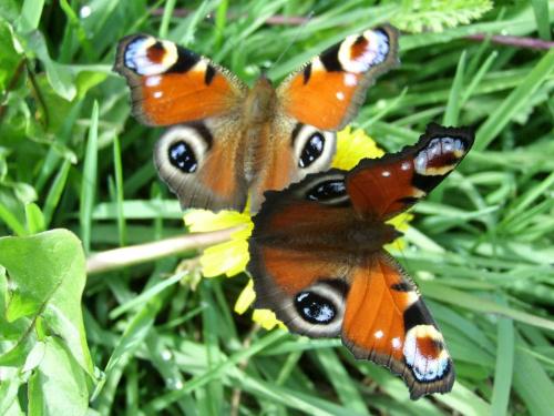 Motyle #motyl #owad